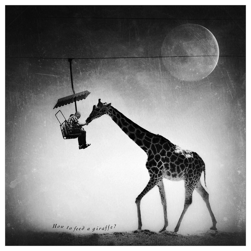 How to feed a giraffe, fot. Michał Koralewski