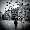 Pigeons on the old square market, fot. Michał Koralewski